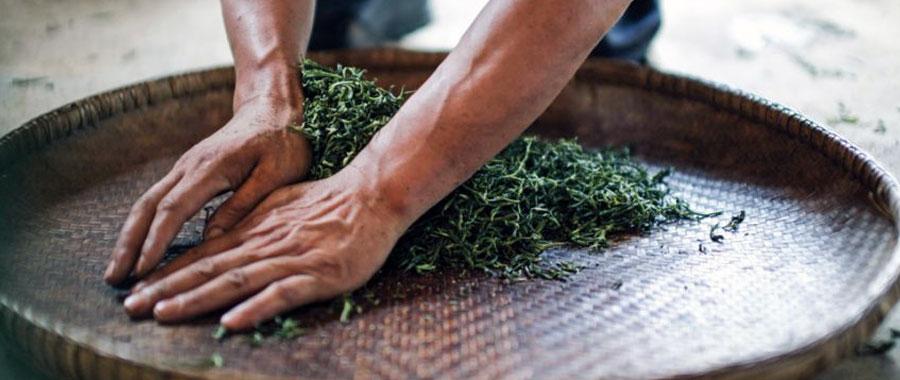 Cómo funciona el proceso de oxidación del té Oolong