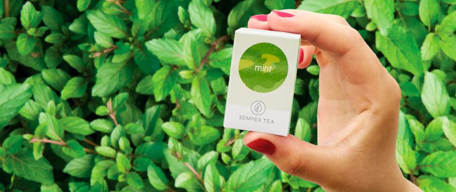 infusion de menta té de menta ecologico semper tea