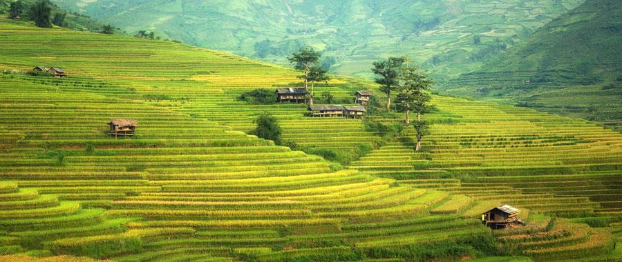 plantaciones de té azul té oolong en china