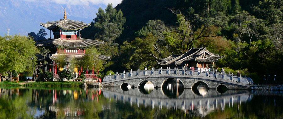 oolong tee lengende des schwarzen drachens aus china